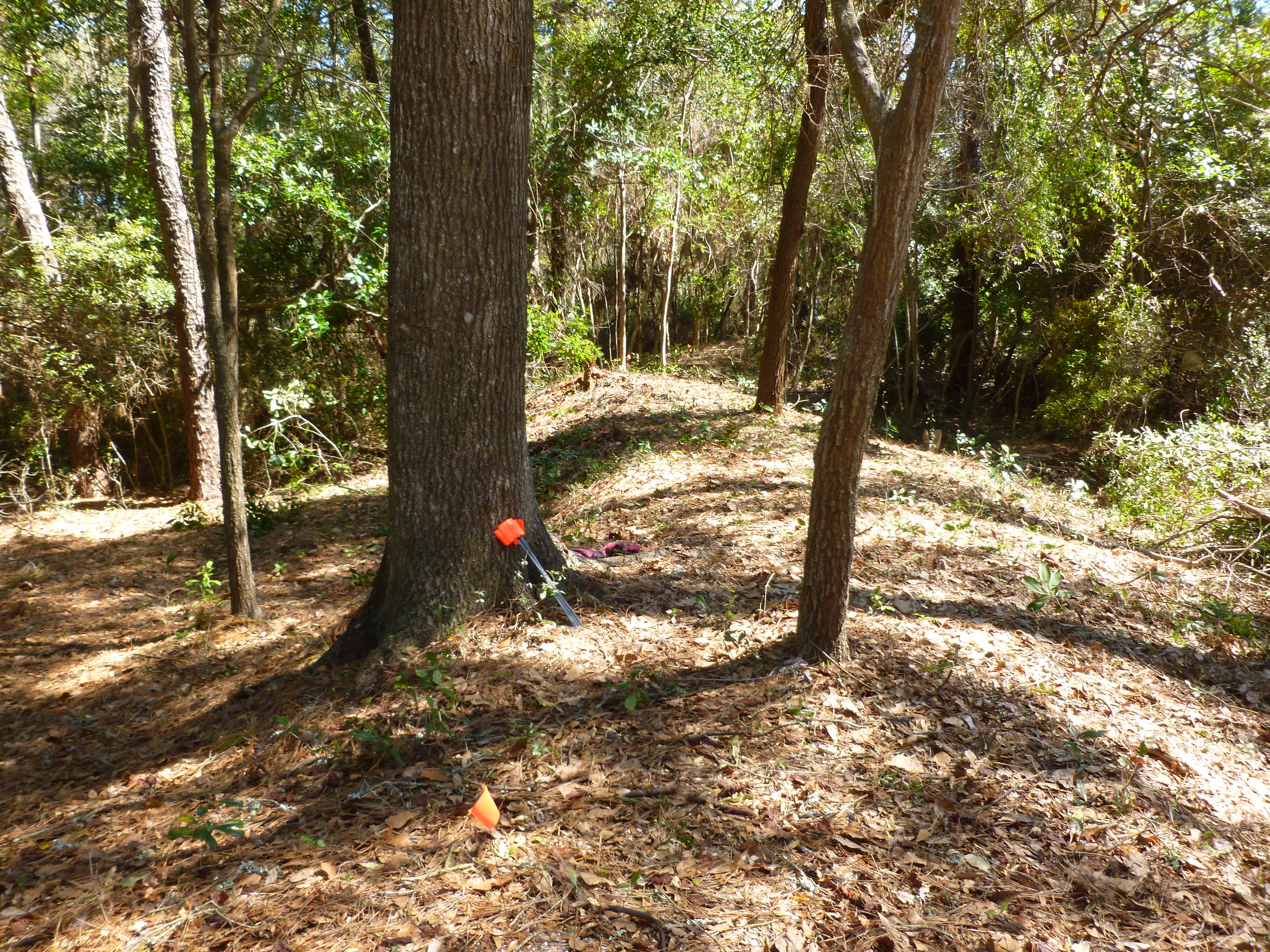 CB Earthworks Clearing